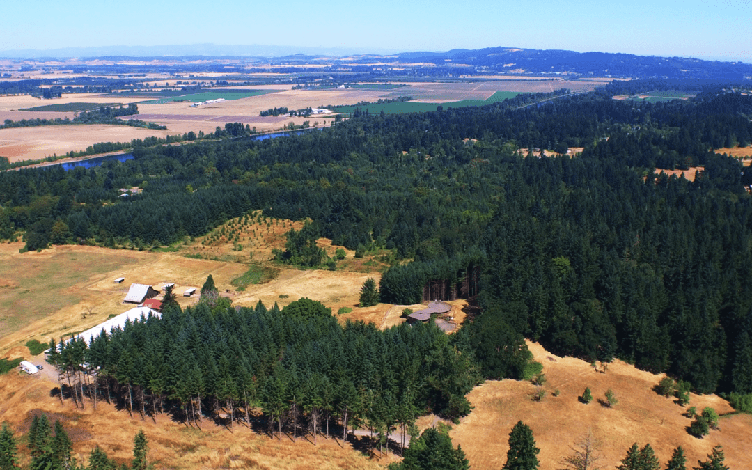 Drone image of a cluster evergreen trees
